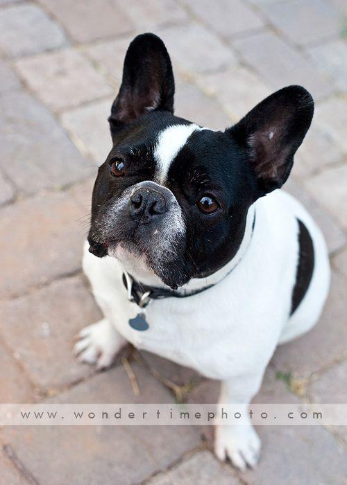 Fun Pet Portraits Tucson